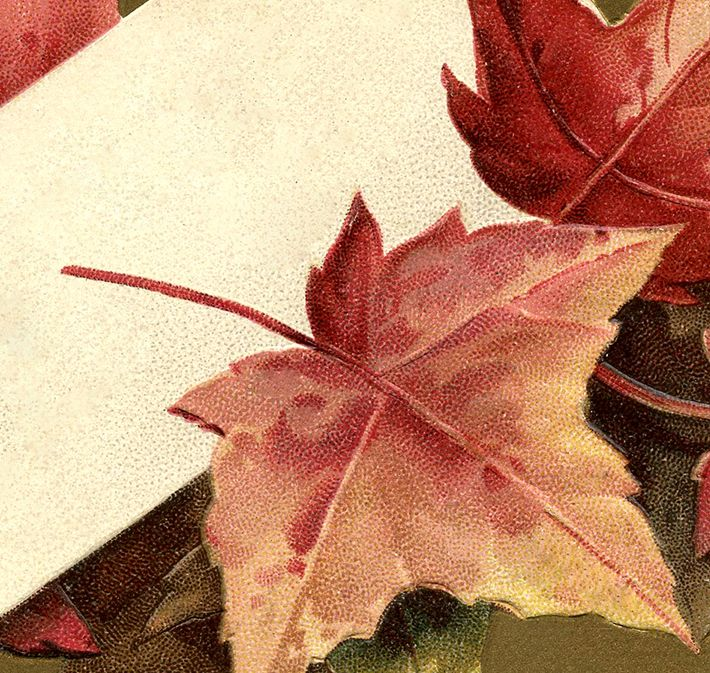 Free Fall Leaves Images