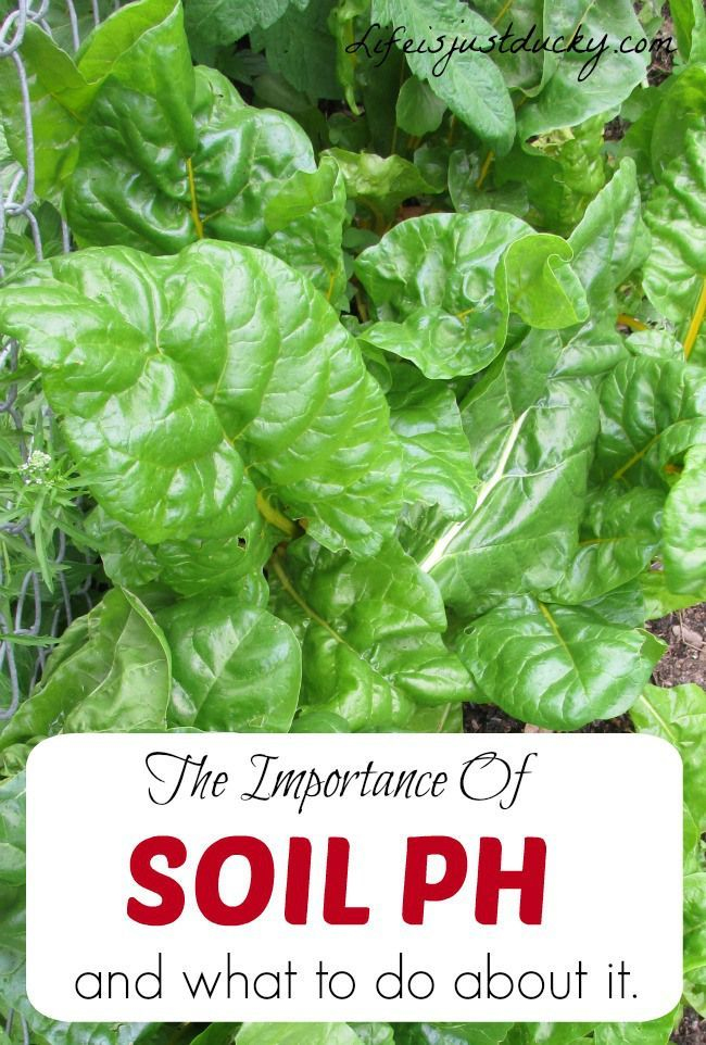 Your Soil PH Effects How Everything In Your Garden Growes. Find Out How To  Check