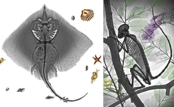 Galeria traz imagens impressionantes de raios-x de animais (uol)
