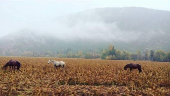 Valle de Colchagua, #Nancagua Fundo Pucudegua, Sexta Región #Chile.