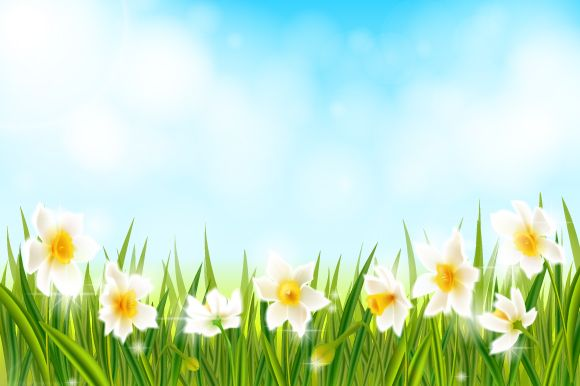 Spring background with daffodil narcissus flowers, green grass, swallows and blue sky. Vector EPS10