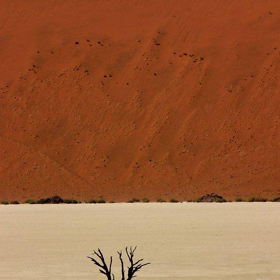 Ancient Tree, Namibia