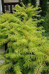 81 Best Trees You Need Images On Pinterest Landscaping