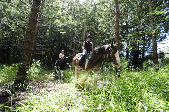 Horse Riding in the Reserves
