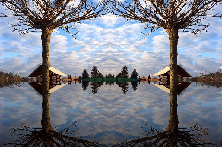 mirror. Tree.