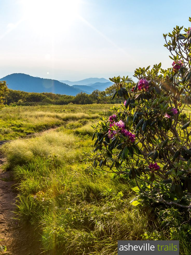 167 Best Top Hikes On The Blue Ridge Parkway Images On Pinterest Blue Ridge Parkway Asheville