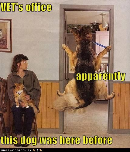 Remind me alot of Chipper, miss that old mutt... :( He hated the Vet with a passion...haha.