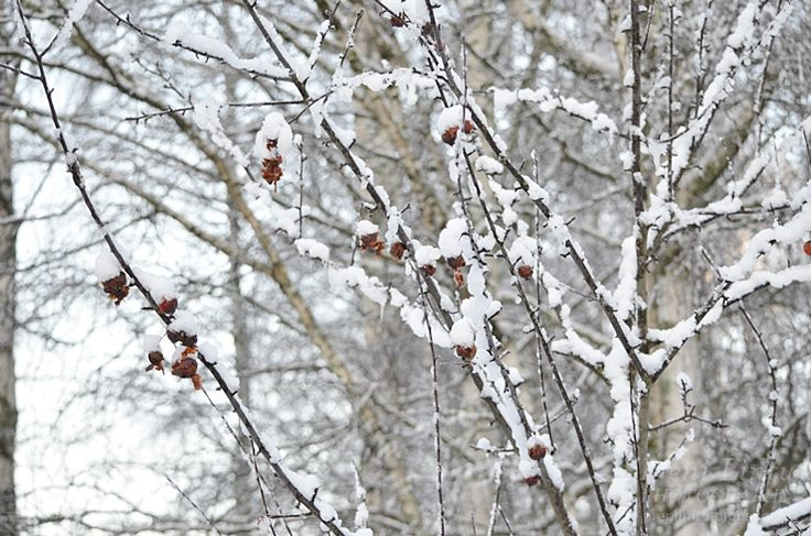 Beautiful winter time