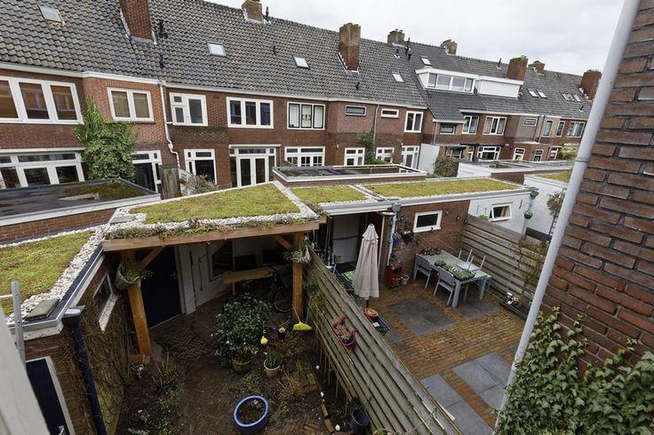 Uniek 15 groene daken in 1 straat in 's-Hertogenbosch. Buren organiseerden dit samen.