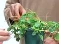 How to kill poison ivy naturally
