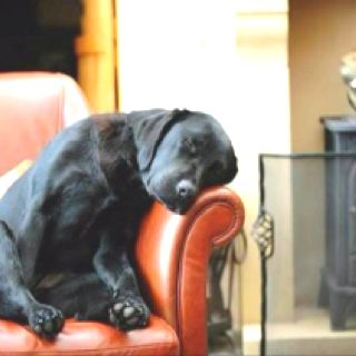 Comfy?Sleep Dogs, Sweets, Chairs, Dogs Lovers, Naps Time, Labs Puppies, Blacklabs, Black Labs, Animal