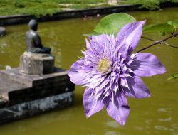 http://wiki.yoga-vidya.de/Maitri Mitgefühl, Wohlwollen, Freundlichkeit, Liebe