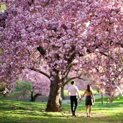 I love this with the cherry blossoms!