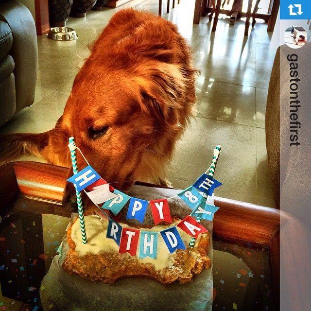 #Repost @gastonthefirst・・・La celebración en familia de los 8 años de  Poker incluyó a su hermanito menor @gastonthefirst , uno de nuestros clientes más chiquitos ❤️ Te deseamos lo mejor hoy y siempre, hermoso, que cumplas muchos más!  #PerroFeliz #chachayelgalgo #pasteleriacanina #paletasparaperros #amorperruno #mascotas #peluditos #perrosaludable #alimentacioncanina #YoCreoEnCali #cali #calico