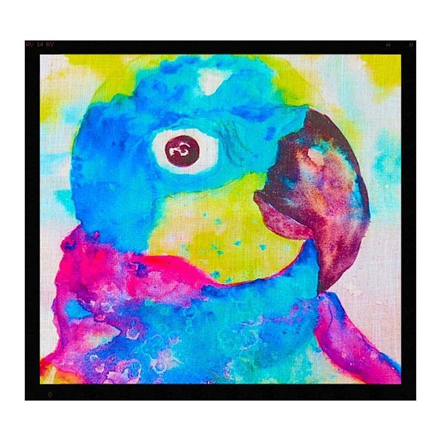 A funky watercolour painting of a colourful parrot now available in cushions #ig_australia #parrot #tropical #queensland #colourful #vibrant #bibrantsilks#art #artistsoninstagram #watercolor #funky#cushion #homedecor #design #