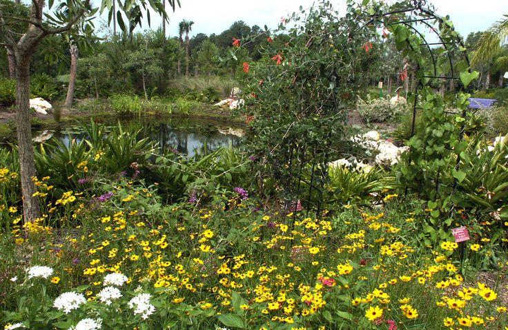 17 best images about butterfly gardens south florida on - South florida vegetable gardening ...