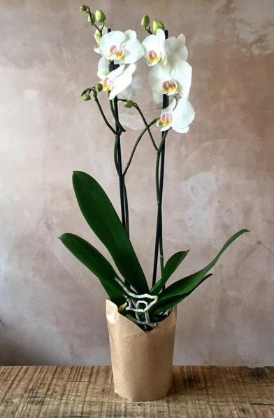 We're teaming up with McBean's to create an introductory class on how to care for orchids. They can last for years and even decades if given the right care.