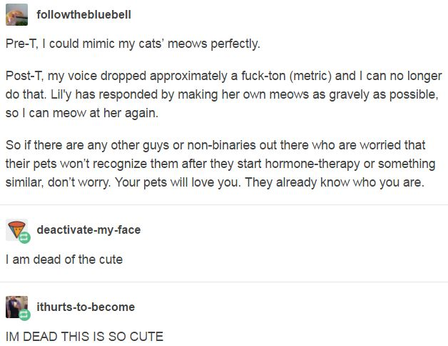 Pre-T, I could mimic my cats' meows perfectly.  Post-T, my voice dropped approximately a fuck-ton (metric) and I can no longer do that. Lil'y has responded by making her own meows as gravely as possible, so I can meow at her again.  So if there are any other guys or non-binaries out there who are worried that their pets won't recognize them after they start hormone-therapy, don't worry. Your pets will love you. They already know who you are.