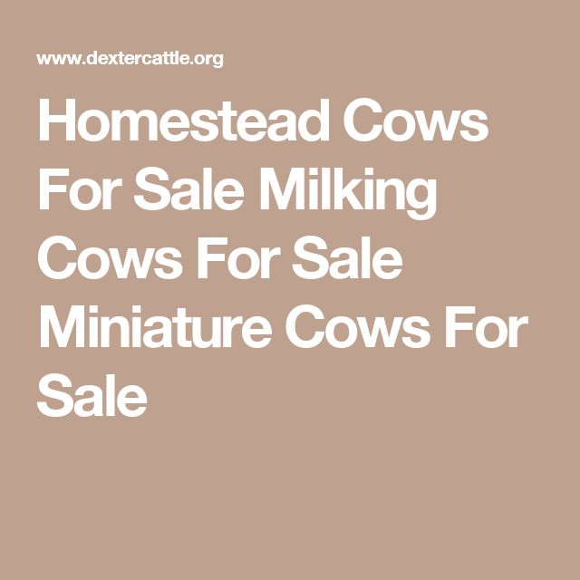 Homestead Cows For Sale Milking Cows For Sale Miniature Cows For Sale
