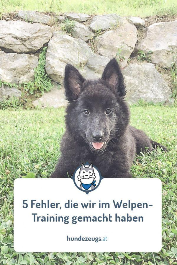 Maulkorb Und Leinenpflicht In Osterreich Alle Bundeslander Leinenpflicht Hund Unterwegs Diensthunde