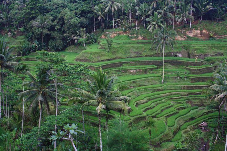 Tegallalang Rice Terraces em Gianyar, Bali