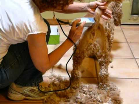 47 best dog grooming images on pinterest poodles standard poodles diy dog grooming like pro groomers solutioingenieria Gallery