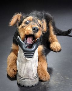 how can i get my dog to stop chewing