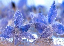 Kwiaty, Szron