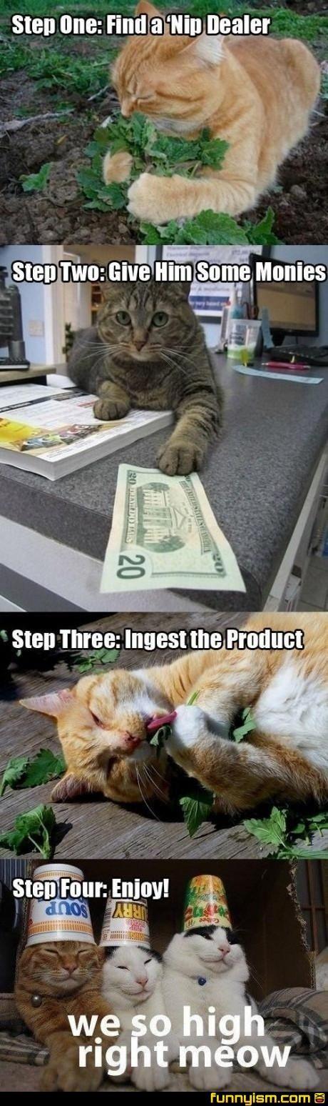 They should legalize catnip, right along with marijuana.