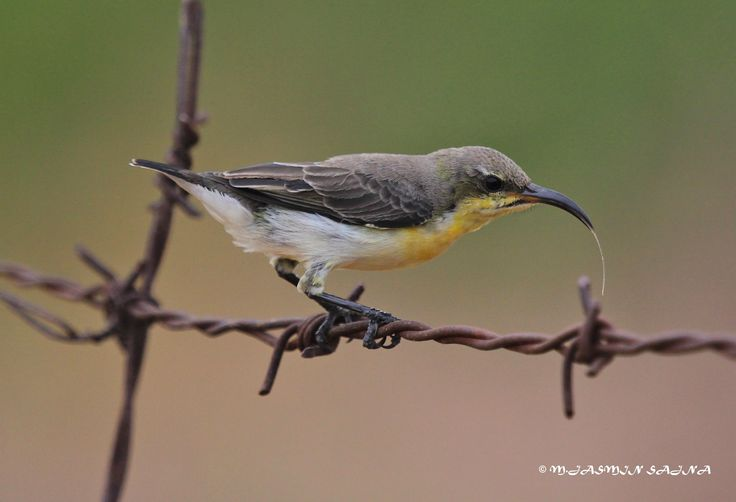 The nectar lover ! by Jasmin Sajna on 500px