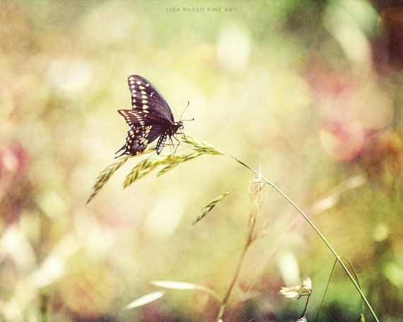 Lente natuur Print of Canvas Art Butterfly Art door LisaRussoFineArt