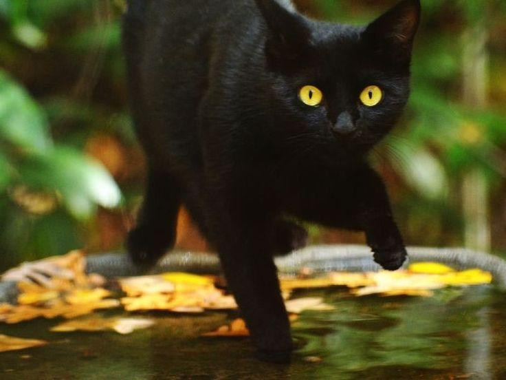 die besten 25 schwarzer kater ideen auf pinterest kater katzen und s e katzen. Black Bedroom Furniture Sets. Home Design Ideas
