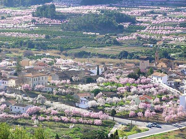 The Alcalali village in the Jalon Valley, surrounded by flowered almond trees