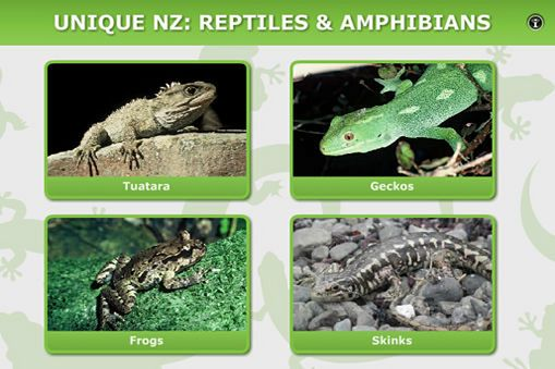 New Zealand's reptiles and amphibians have many unique adaptations and unusual life processes. Click on any of the animals to view short video clips and images to learn more.
