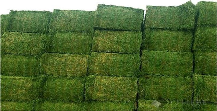 Lucerne Bales (Alfalfa Hay) For Sale Lucerne Bales (Alfalfa Hay) For Sale Supplying high quality Alfalfa Hay that is available in compressed bundles, our Alfalfa Hay is extremely popular in the market.