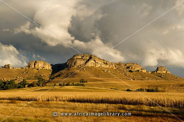 Maize field in front of sandstone mountain, Free State, South Africa
