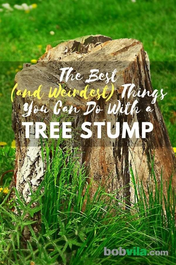 The Best And Weirdest Things You Can Do With A Tree Stump With Images Tree Stump Decor Diy Garden Furniture Tree Stump