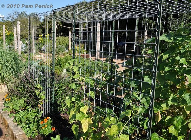 Gourd Trellis Made With Cow Panels How To Build A Cattle