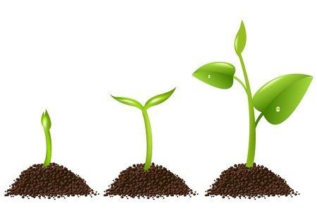 Per chi non è molto esperto e si appresta a coltivare un orto, una piccola guida su quali ortaggi seminare ad aprile...