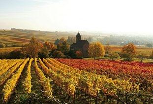 Offizielle Website der Südlichen Weinstrasse: Dort findet Ihr alle Infos rund um den Urlaub in der Pfalz:  Weinfeste, gutes Essen und Wein und natürlich zu Sehenswürdigkeiten und Übernachtungsmöglichkeiten