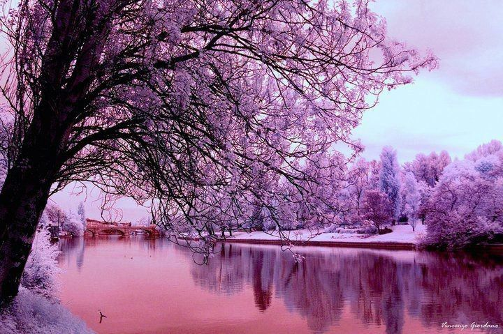 Paysage... rose