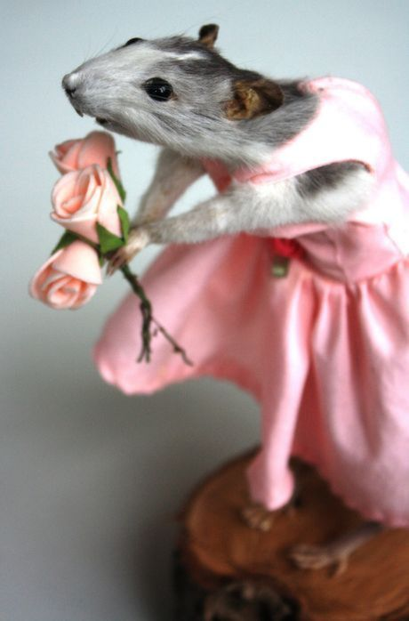Vegan Taxidermist's Beautiful Creations Pose Ethical Questions