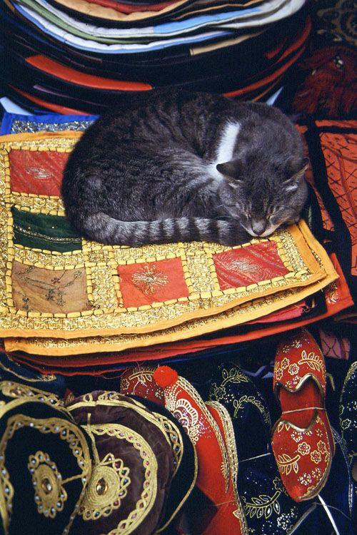 Cat in the Grand Bazaar, Istanbul.