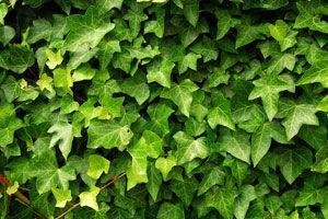 Si tu hogar es propenso a verse afectado por la humedad, te interesará saber que hay plantas que pueden ayudarte a controlarla.