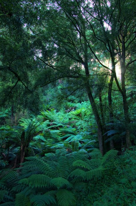 The ferns amongst the trees