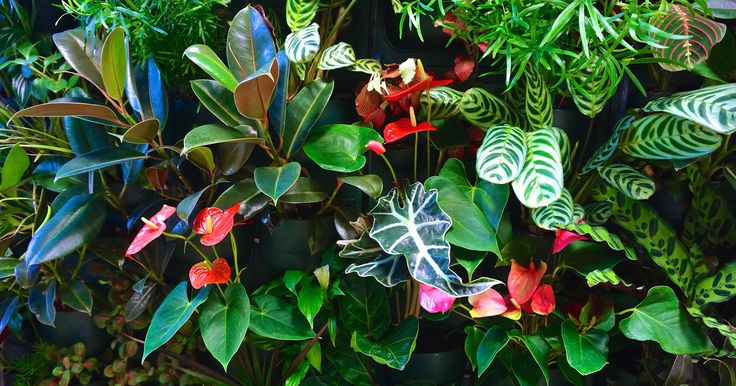 Фитостены Flowall | фитомодули #verticalgarden #greenwall #livingwall #Green #Wall #minigarden #фитокартины #фитостены #Flowall