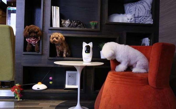 La société Pawbo, société qui a choisi, le marché de l'animal de compagnie propose, Pawbo+, une caméra interactive pour communiquer avec votre animal de compagnie et qui en plus lui donne à manger.  Si vous pensiez avoir tout vu sur Planet sans fil, c'était sans compter sur nos contacts, relation... https://www.planet-sansfil.com/pawbo-distributeur-de-nourriture-connecte-chat/ animal domestique, chat, chien, Internet des objets, objet connecté, pawbo+, sans fil