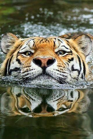 Que genial se está dando seguimiento un bañito con estos calores!!!!!