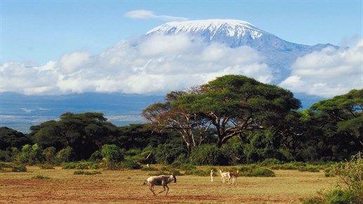 View of Kilimanjaro, Tanzania - KILROY
