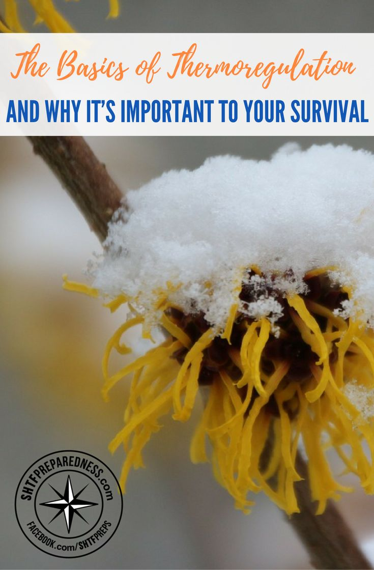 The Basics of Thermoregulation and Why It's Important to Your Survival — Learn about the ins and outs of thermoregulation when it comes to the human body and why it's so fundamentally important to your survival, especially if you happen to be lost in the wilderness. It's one of those easy to learn things you might not really think about, but once put into perspective, clicks into place.